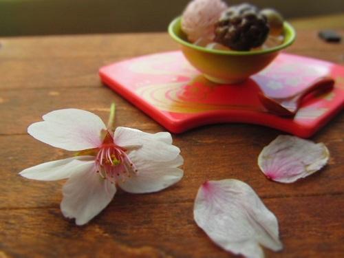 桜日和&桜