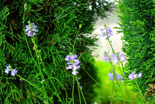 野の花 4