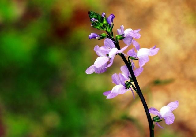 野の花 6