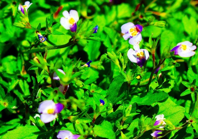 野の花 7