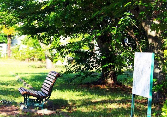 緑陰のベンチ2