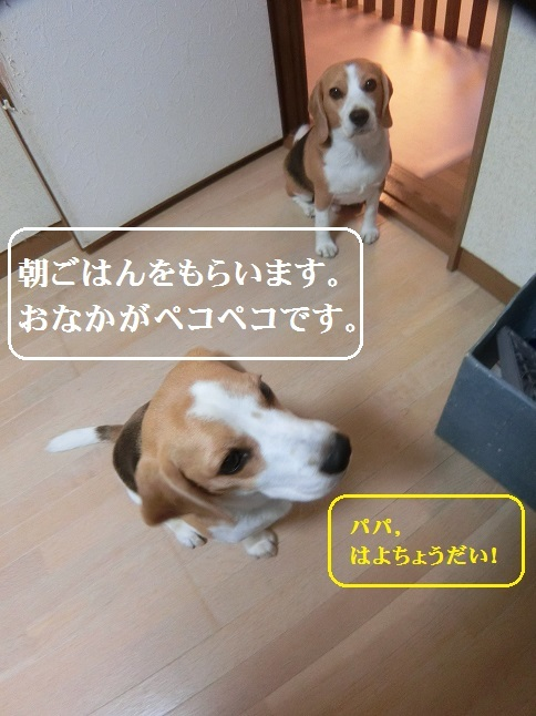 CIMG1010.jpg