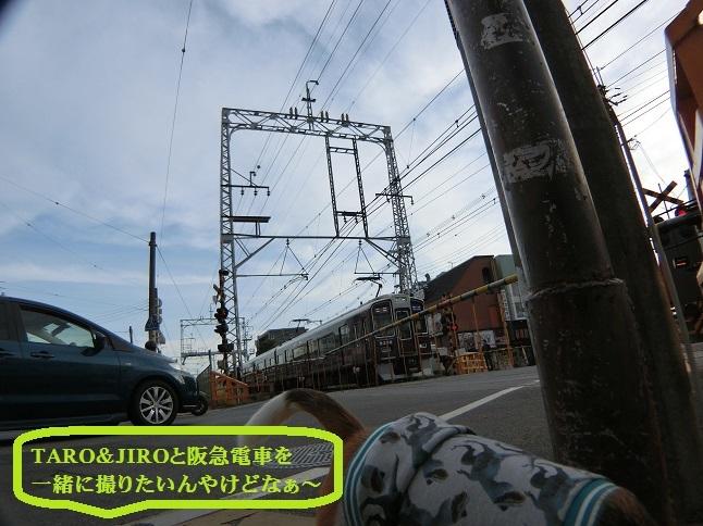 CIMG8844.jpg
