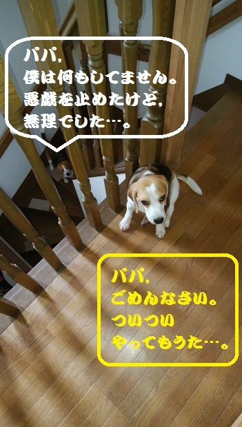 IMG_20170508_174537.jpg