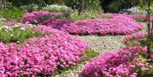 2009年4月に写した芝桜
