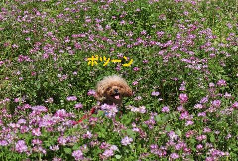 IMG_7615-crop.jpg