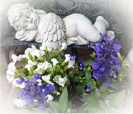 居眠り天使トレニア ブル-サルビア