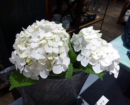 店内紫陽花