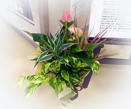 観葉植物寄せ