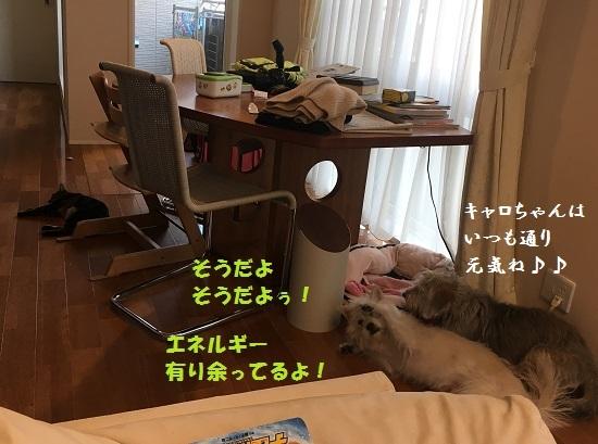 2017年5月2日④