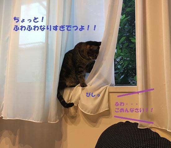 2017年6月23日④