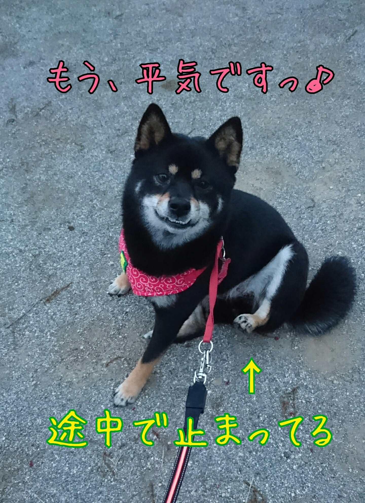 201705130932150e0.jpg