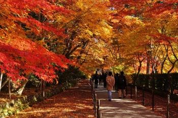 131130_Komyoji_Nagaokakyo_Kyoto_pref_Japan01s3svga