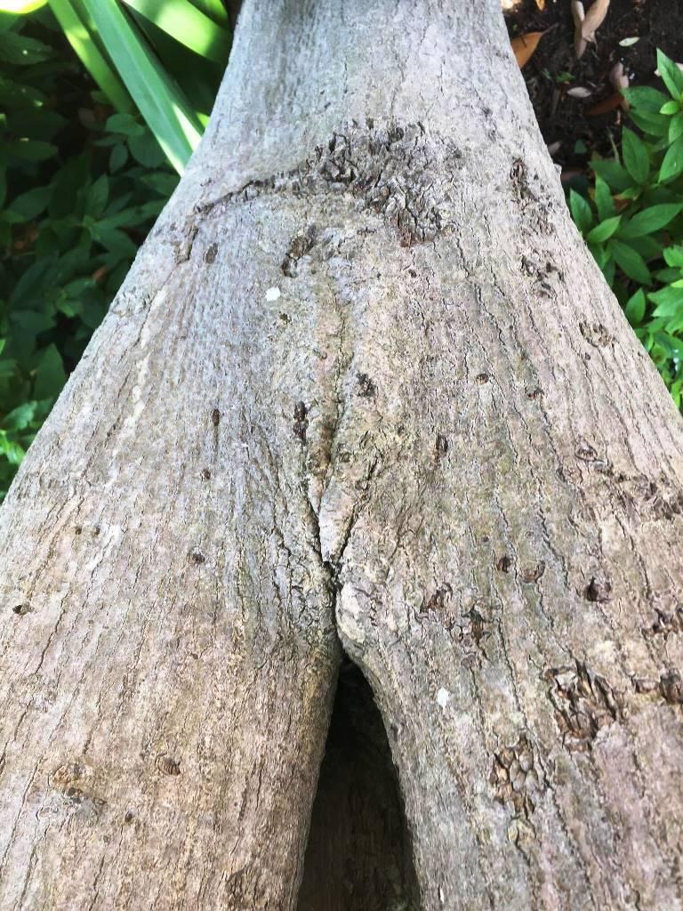 枝分かれ割れ目