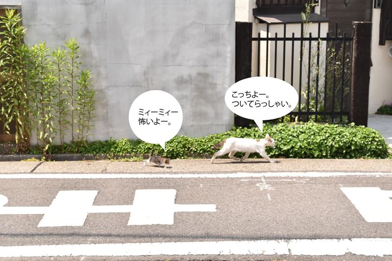 0601neko2.jpg