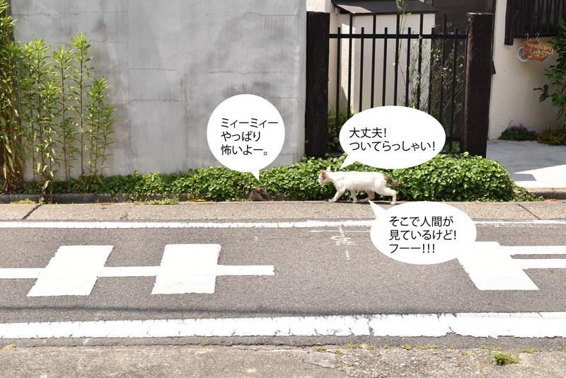 0601neko3.jpg