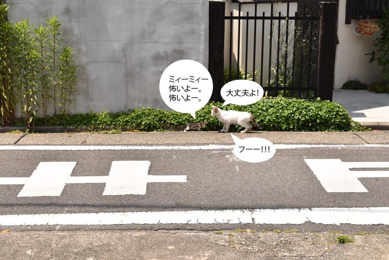 0601neko4.jpg