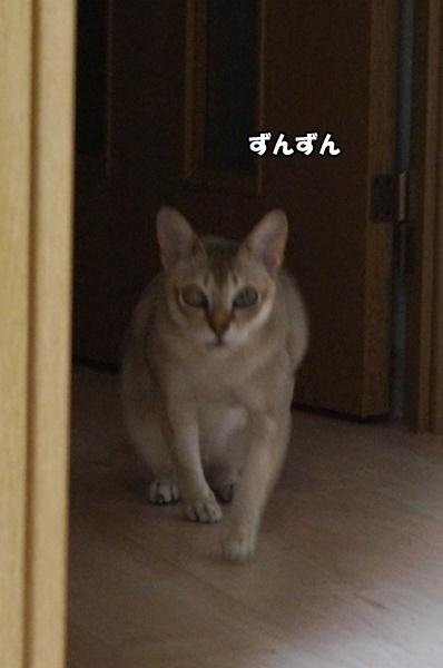 DSC01633_201705170754575fa.jpg