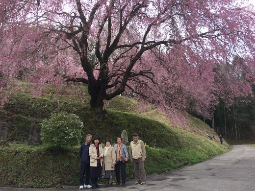 4_27シニア大6班でいた立屋の桜とおやきの里 (2) (520x390)