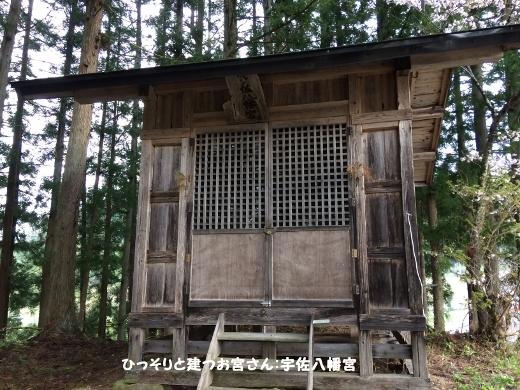 5_6朝のウォーキング (1) (520x390)