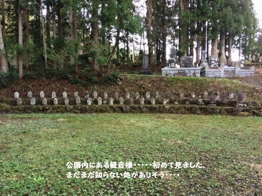 5_7朝の散歩 (4) (520x390)