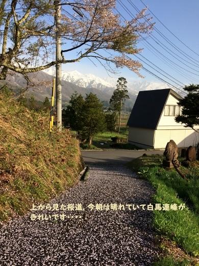 5_7朝の散歩 (9) (390x520)