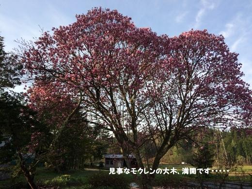 5_7朝の散歩 (10) (520x390)