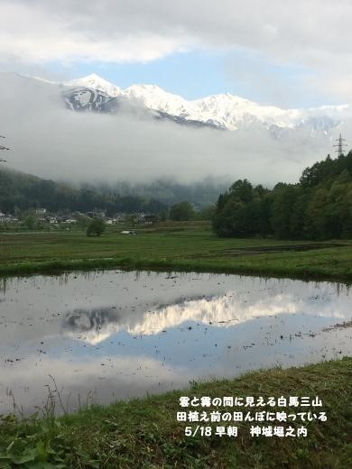 5_18朝散歩    (2) (390x520)