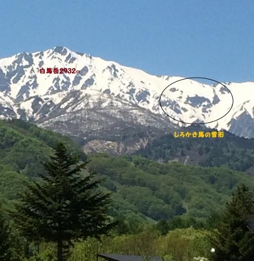 5_19白馬岳雪形 (2) (506x520)