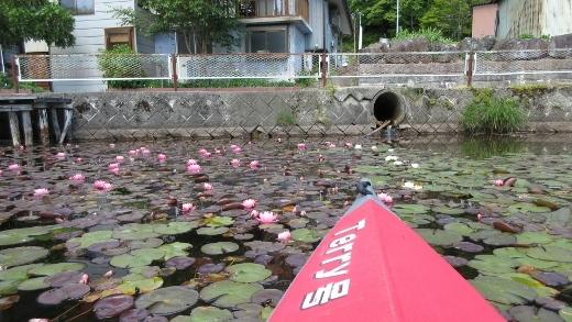 6_15木崎湖で森さんとカヌー (24) (520x293)
