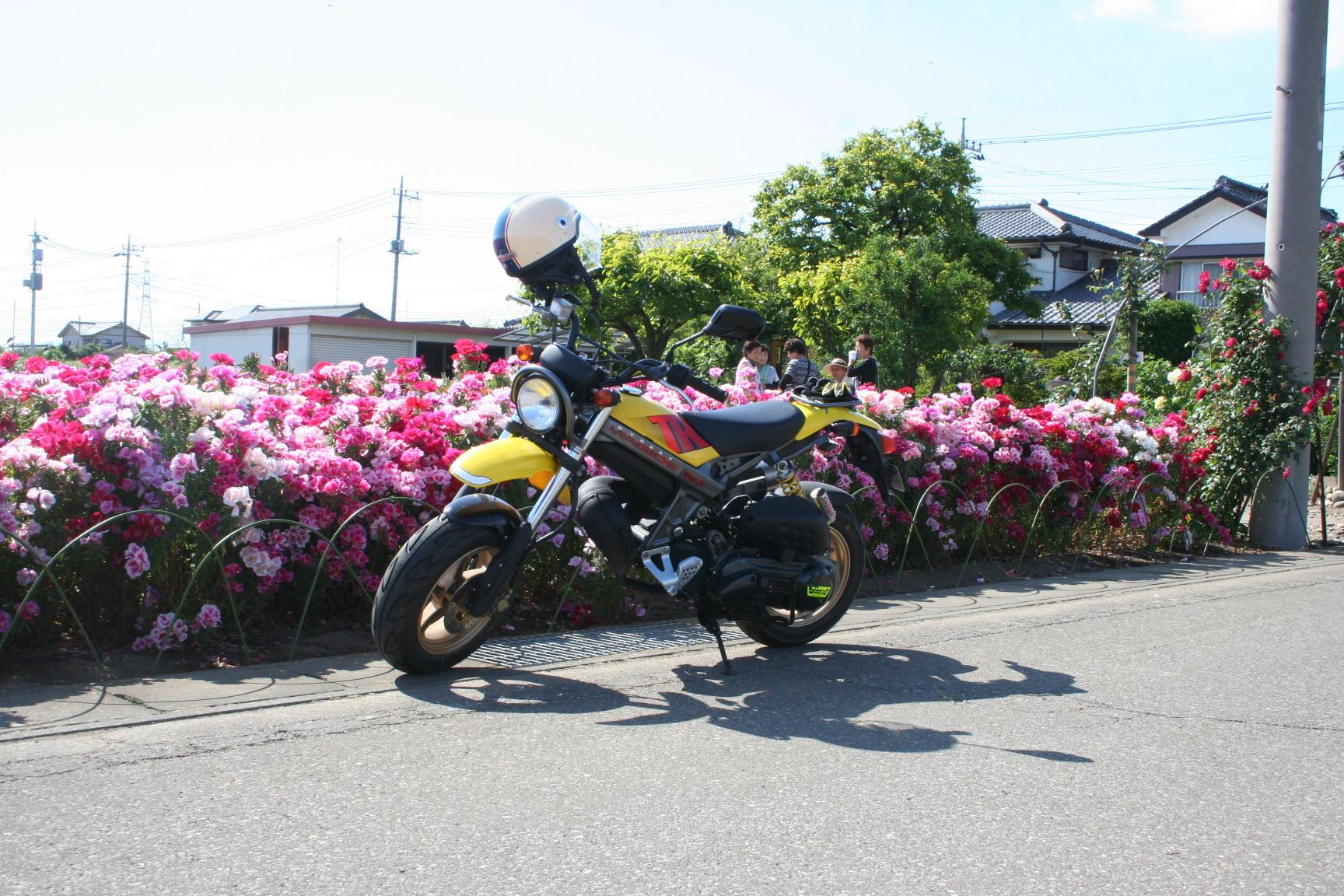 太田市のストマジ