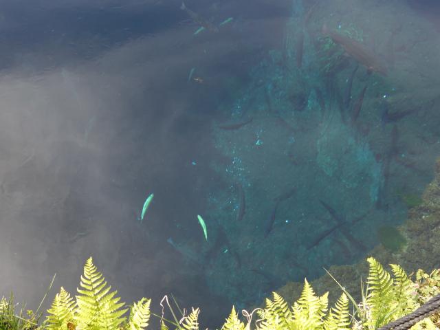 b_019深い綺麗な池