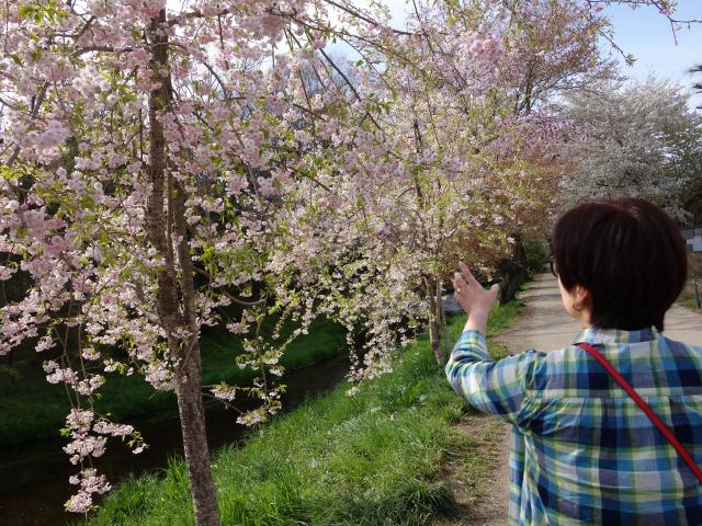 b_024桜