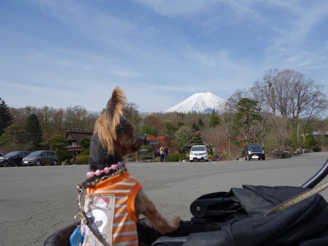 b_029富士山とティアラ