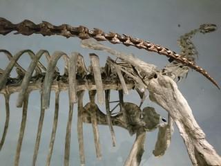 s恐竜博物館5