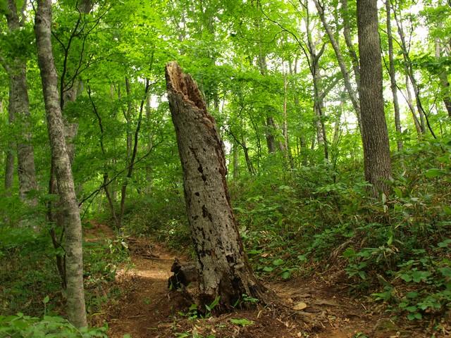 s01朽ちた木