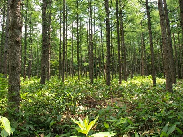 s下枝が落ちた林