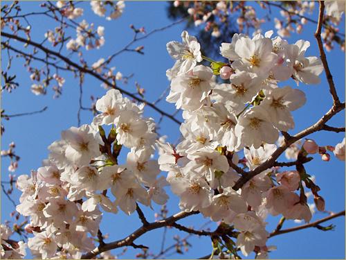 2011-0411-09.jpg