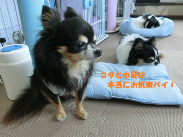 CIMG2055お気楽5