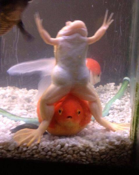 蛙&金魚w