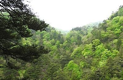 都民の森の新緑
