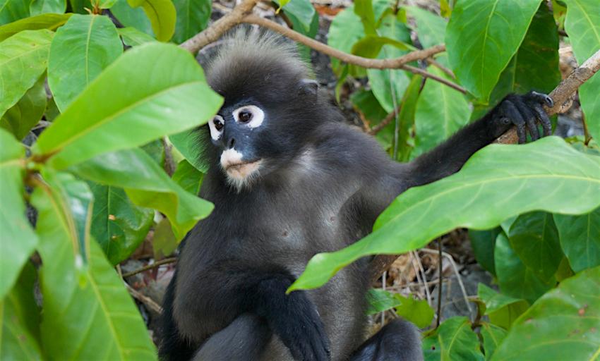 サムイ島旅行記 3日目 アントン海洋国立公園 猿3
