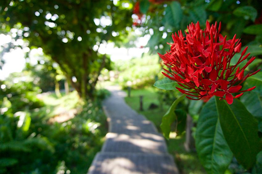 サムイ島旅行記 5日目 散歩1