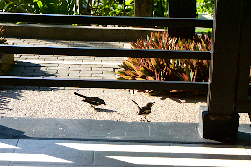 サムイ島旅行記 2日目 四季鳥