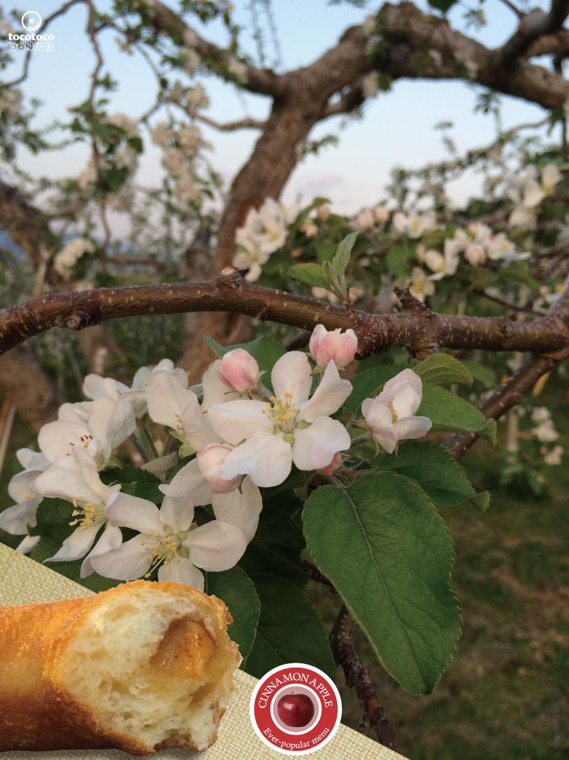 シナモンアップル2017りんごの木 | tocotocoドーナツ