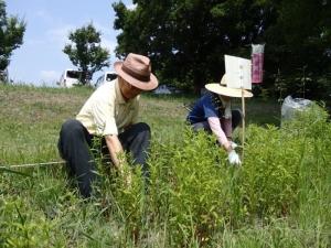 野草園管理作業170523(1)