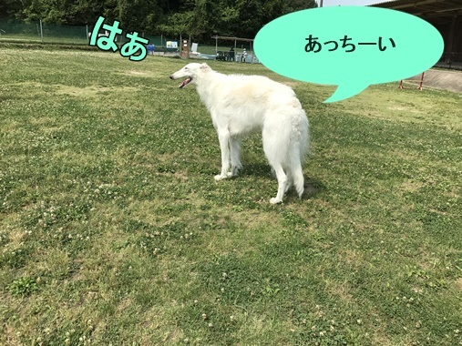 20170601185029c6b.jpg