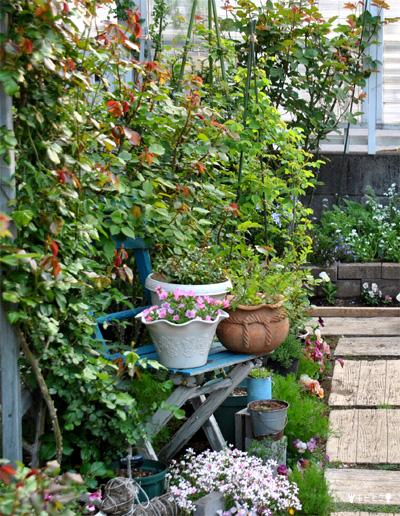 チビとこお庭の様子