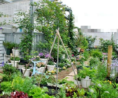 お庭お庭の様子