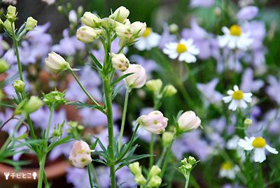お庭のお花